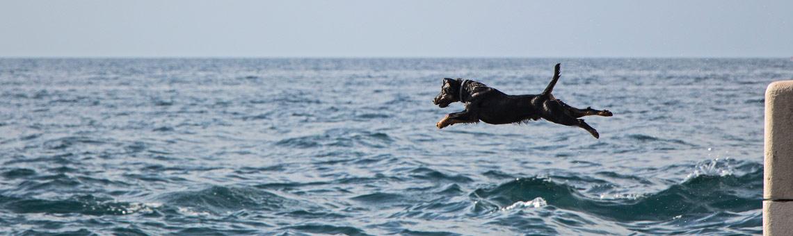 Auch für kollaborativen Journalismus gilt: Manchmal braucht es einfach nur ausreichend Mut, um den Sprung ins Wasser zu wagen. I Foto: Andrea Hansen